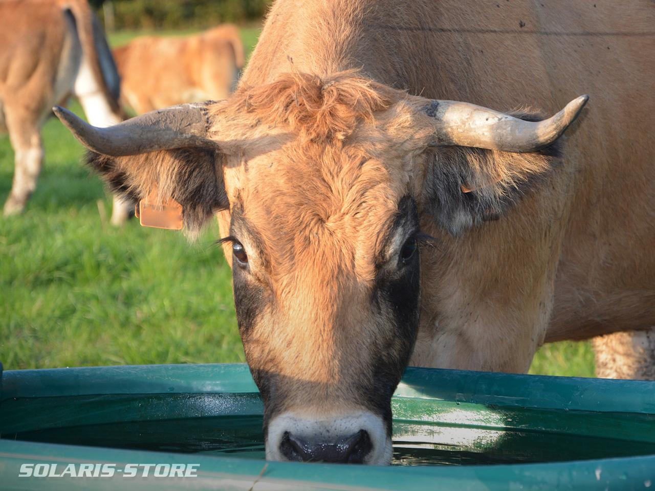 Abreuvoir alimenté par une pompe solaire pour éviter l'abreuvement direct du bétail dans la rivière
