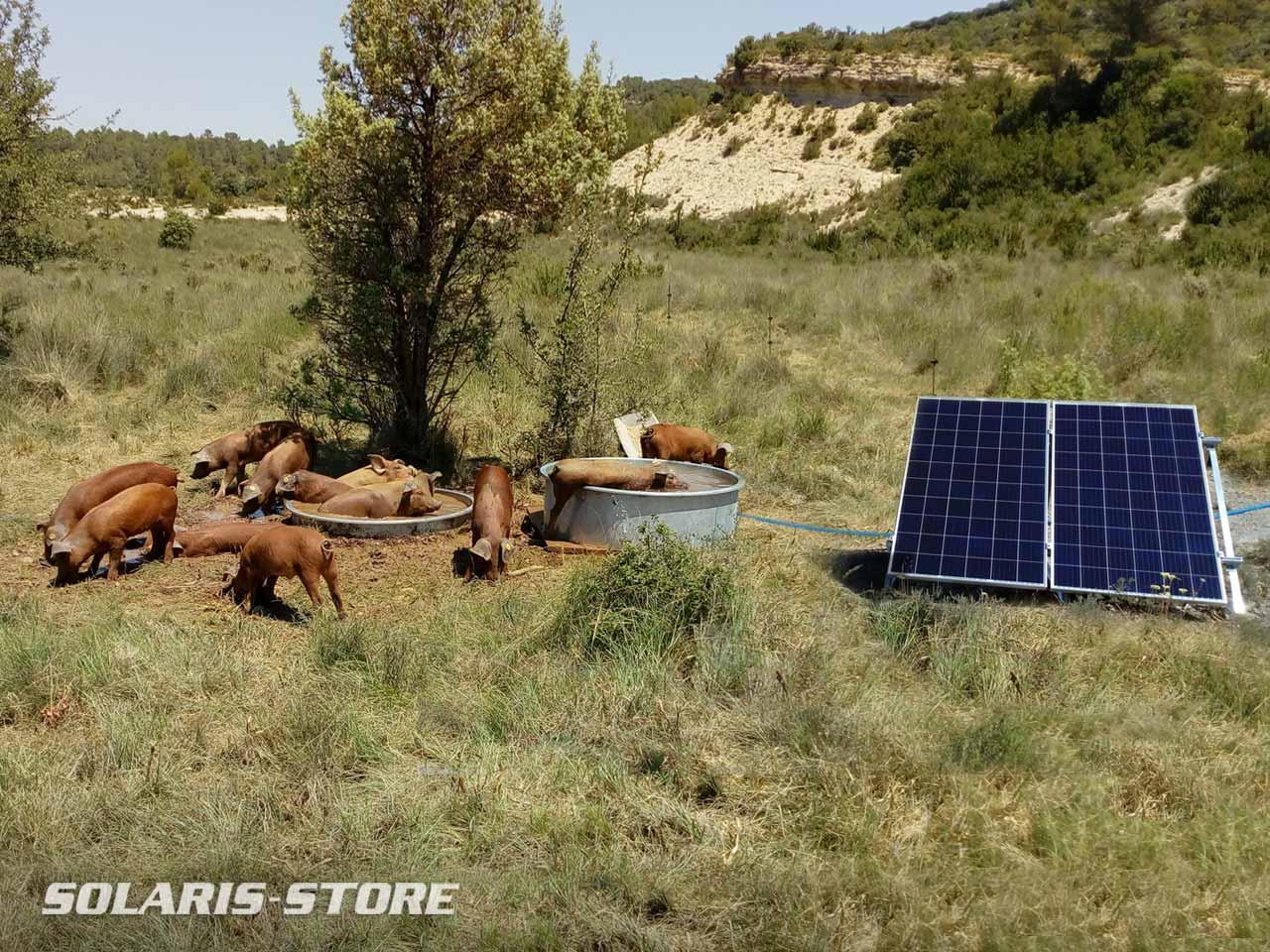 Kit abreuvoir solaire autonome pour l'élevage