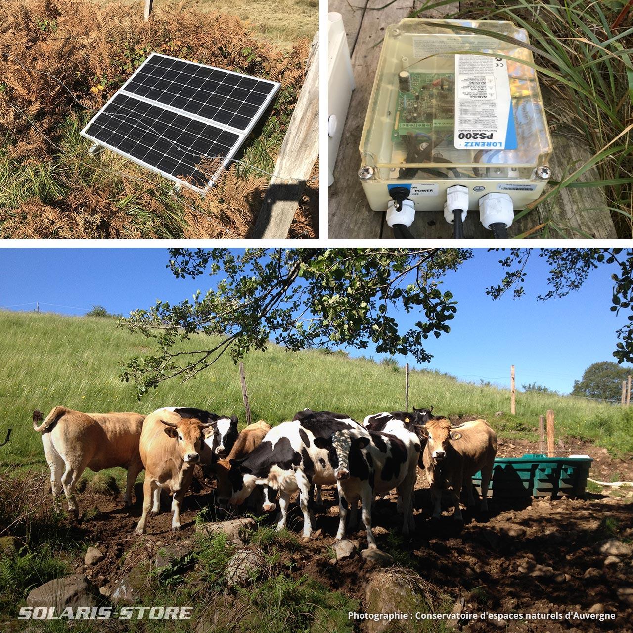 Alimentation en eau d'un abreuvoir photovoltaïque pour un troupeau de vache